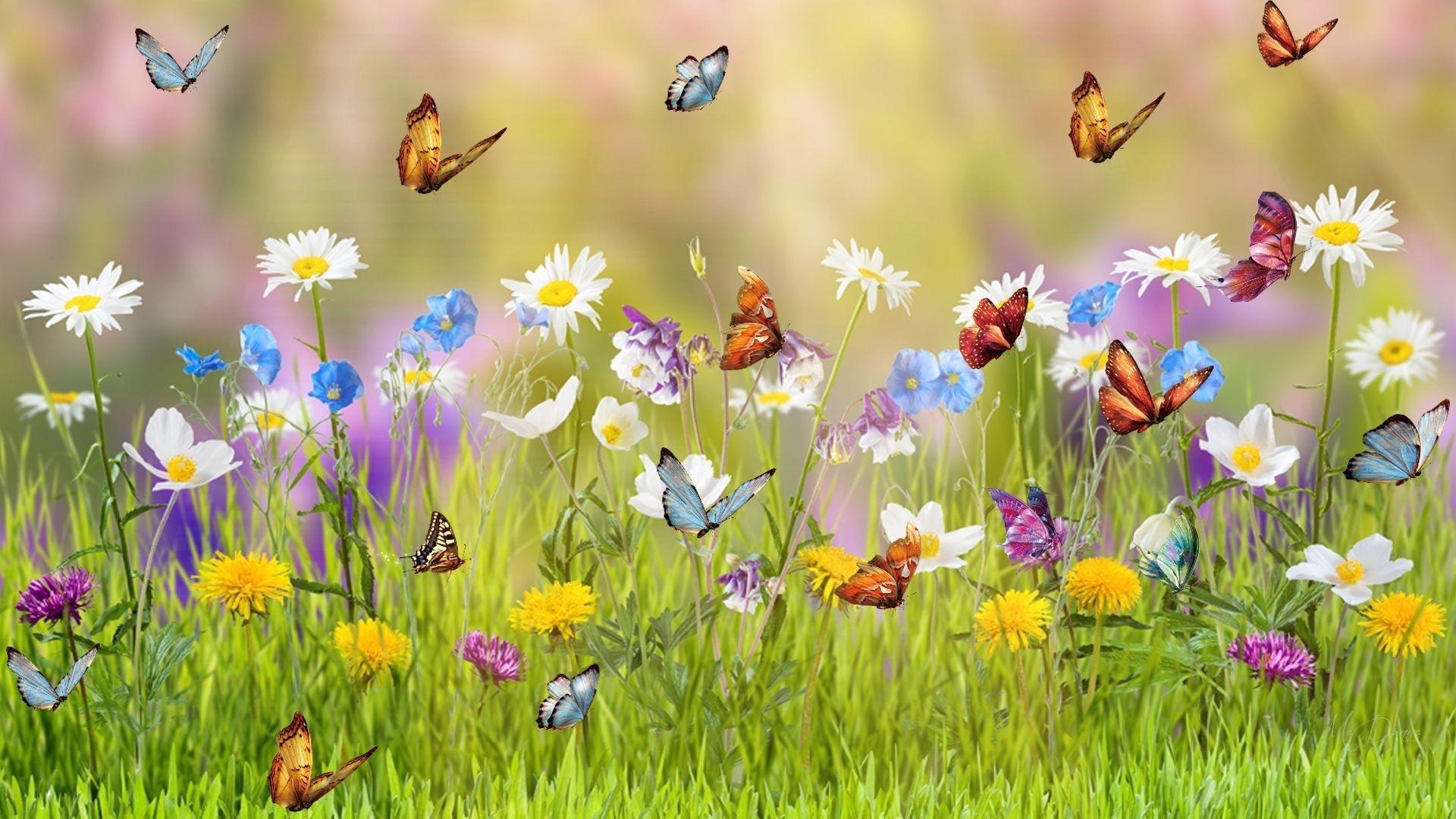 Kisah Tukang Kebun dan Penjaring Kupu-Kupu